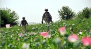 US troops patrolling poppy fields in Afghanistan