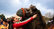 Camel Wrestling on the Aegean Coast