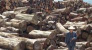 myanmar-burma-logging-trafficking-mining-drugs-opium-government