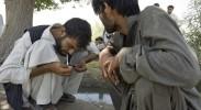 drug-war-afghanistan-opium-poppies