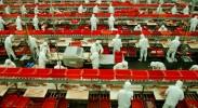 china-apple-factory-benzene-poison
