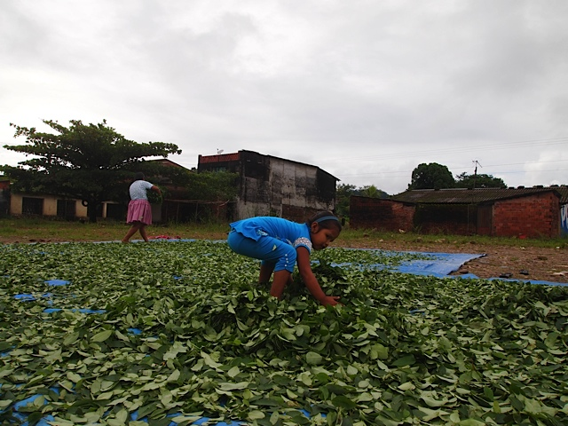 bolivia-coca-leaf-production-drug-war-cocaine
