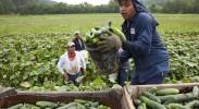obama-immigration-executive-order