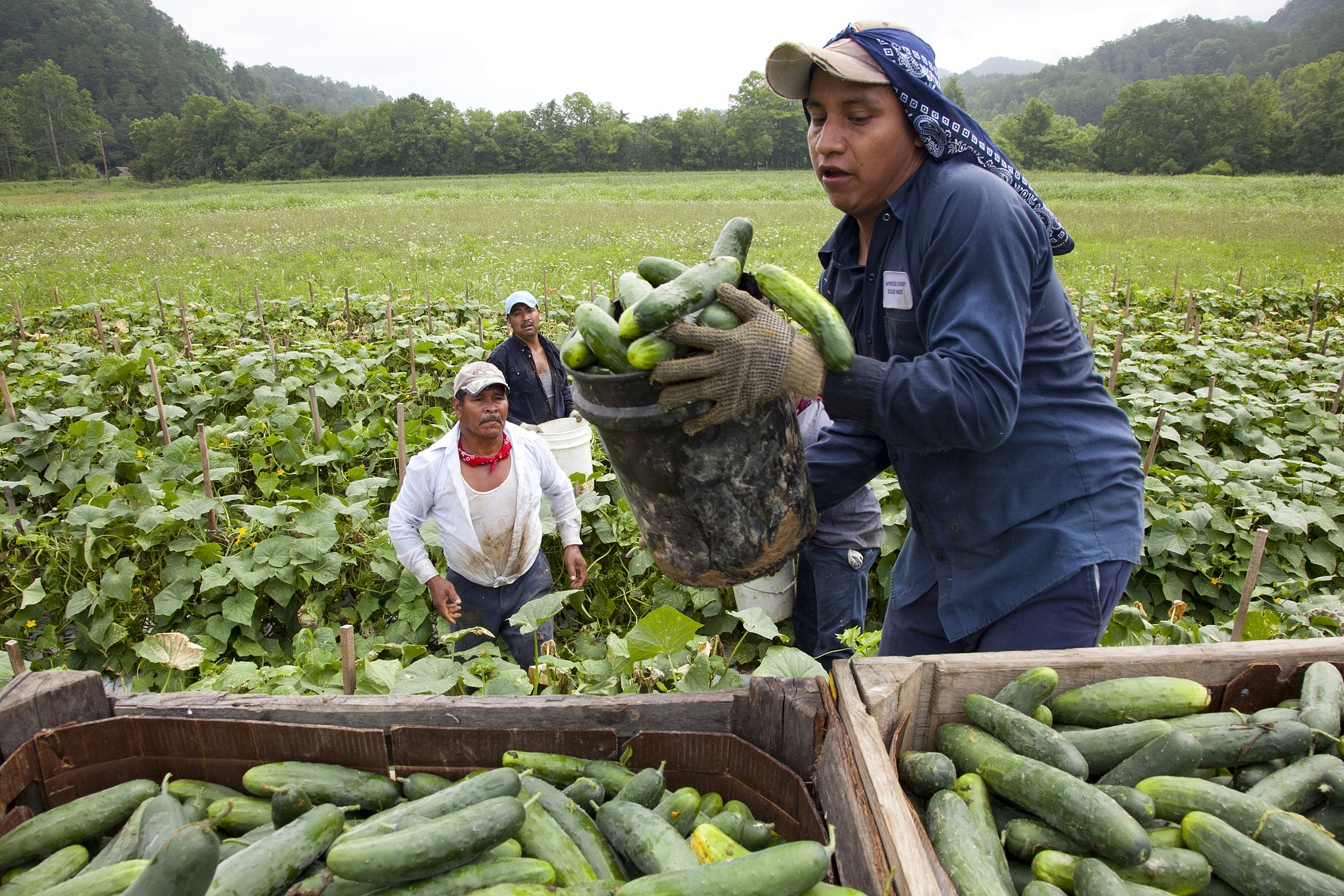 problems by farmers and immigrants in American farmers faced several problems in the 1890s farmers were losing their farms because they could not repay their mortgages farmers were being charged very high interest rates on loans.