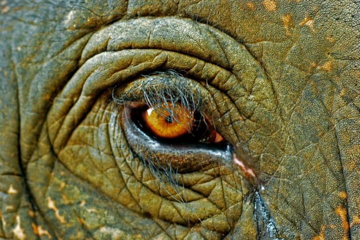 wildlife-trade-southeast-asia-poachers